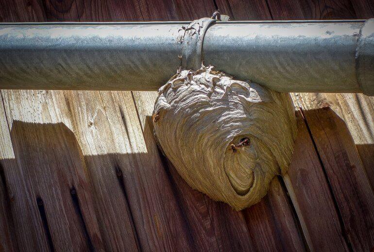 Ein Wespennest am Hausdach